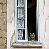 May 5, 2011.  A cat keeps a watchful eye for birds from a high window. Tournon, France.